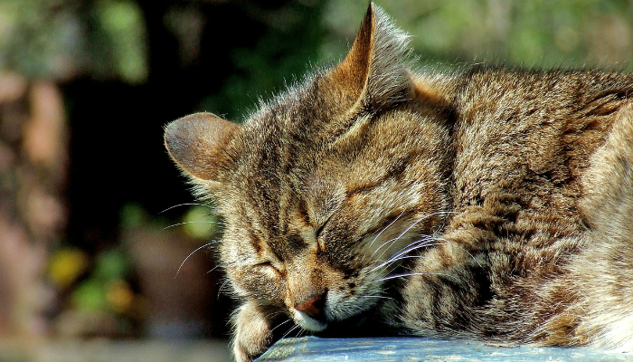 気持ちよさそうに眠る虎猫